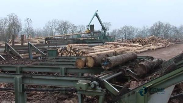 实木体育木地板用什么材料3