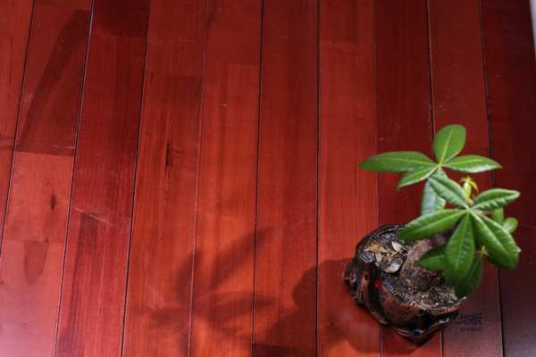 硬木企口哪个品牌好?篮球运动木地板
